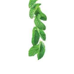 Green mint syrup 1L