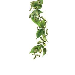 Green tea syrup 1L